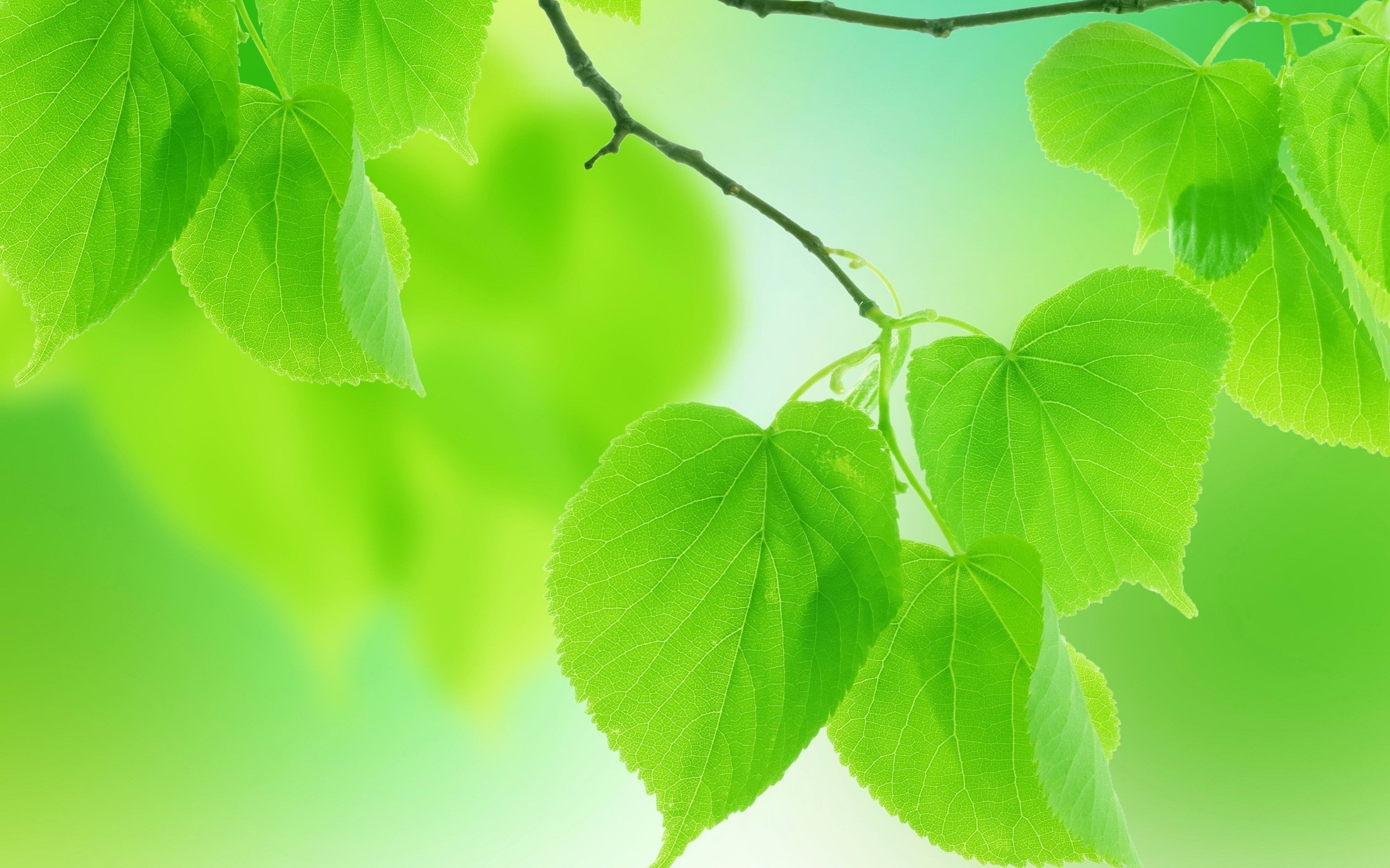 Leaves Green Close Up Branch – [2560 x 1600]