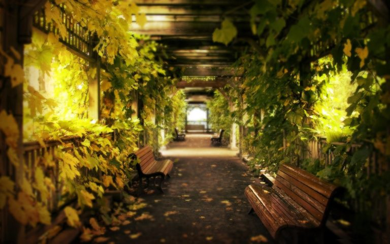 Light Alley Natural Lighting 2560 x 1600 768x480
