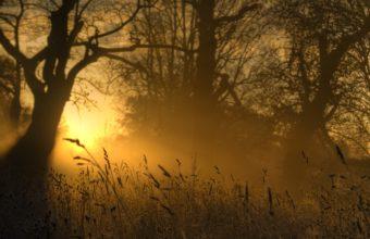 Light Sun Ears 3872 x 2592 340x220