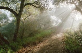 Light Trees Road 1920 x 1200 340x220