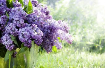 Lilac Twigs Flowers Bucket Spring 1920 x 1200 340x220
