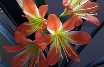 Lily Flower Stamens 1600 x 1200 340x220