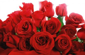 Lovely Red Roses Wallpaper 1680 x 1050 340x220