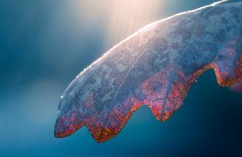Macro Sunlight Rays Beams Ray Leaf 1920 x 1200 340x220