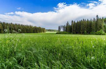 Meadow Forest Sunny Grass Flowers 3840 x 2160 340x220