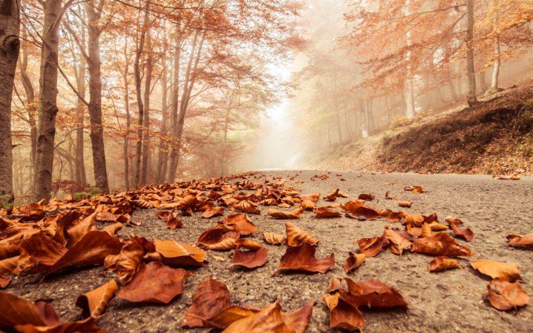 Misty Foggy Road Autumn Beech 2880 X 1800 768x480