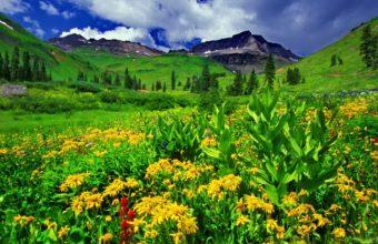 Mountain Greenery 2000 x 1333 340x220