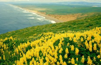 Mountain Of Yellow Flowers Near Beach 1920 x 1080 340x220