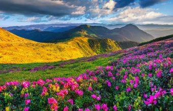 Mountains Azalea Scenery Sky 4200 x 3513 340x220