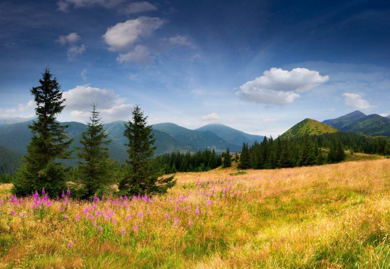Mountains Eating Field Trees Trees Grass 5348 x 3689 768x530