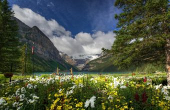 Mountains Flowers Lake Louise Lake 1920 x 1200 340x220