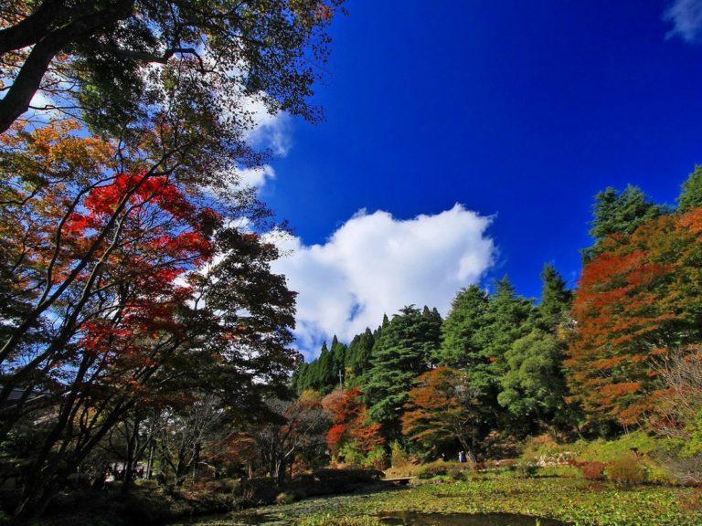 Nature Autumn Trees 1200 X 900 768x576