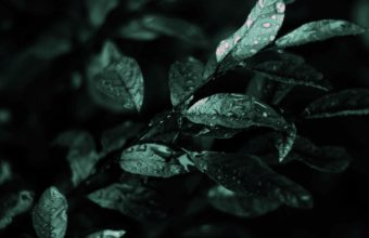 Nature Dark Leaves Macro Depth 2560 x 1600 340x220