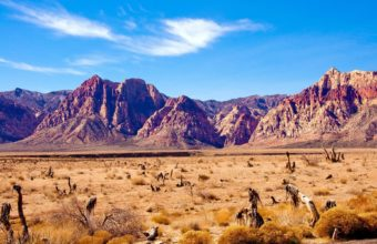 Nature Deserts Landscapes Plants 1920 x 1200 340x220