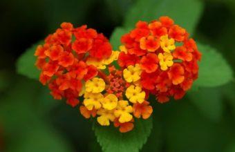 Nature Flower Garden Love Pink Hd 2880 x 1800 340x220