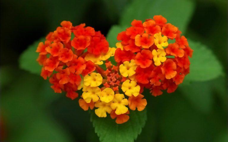 Nature Flower Garden Love Pink Hd 2880 x 1800 768x480