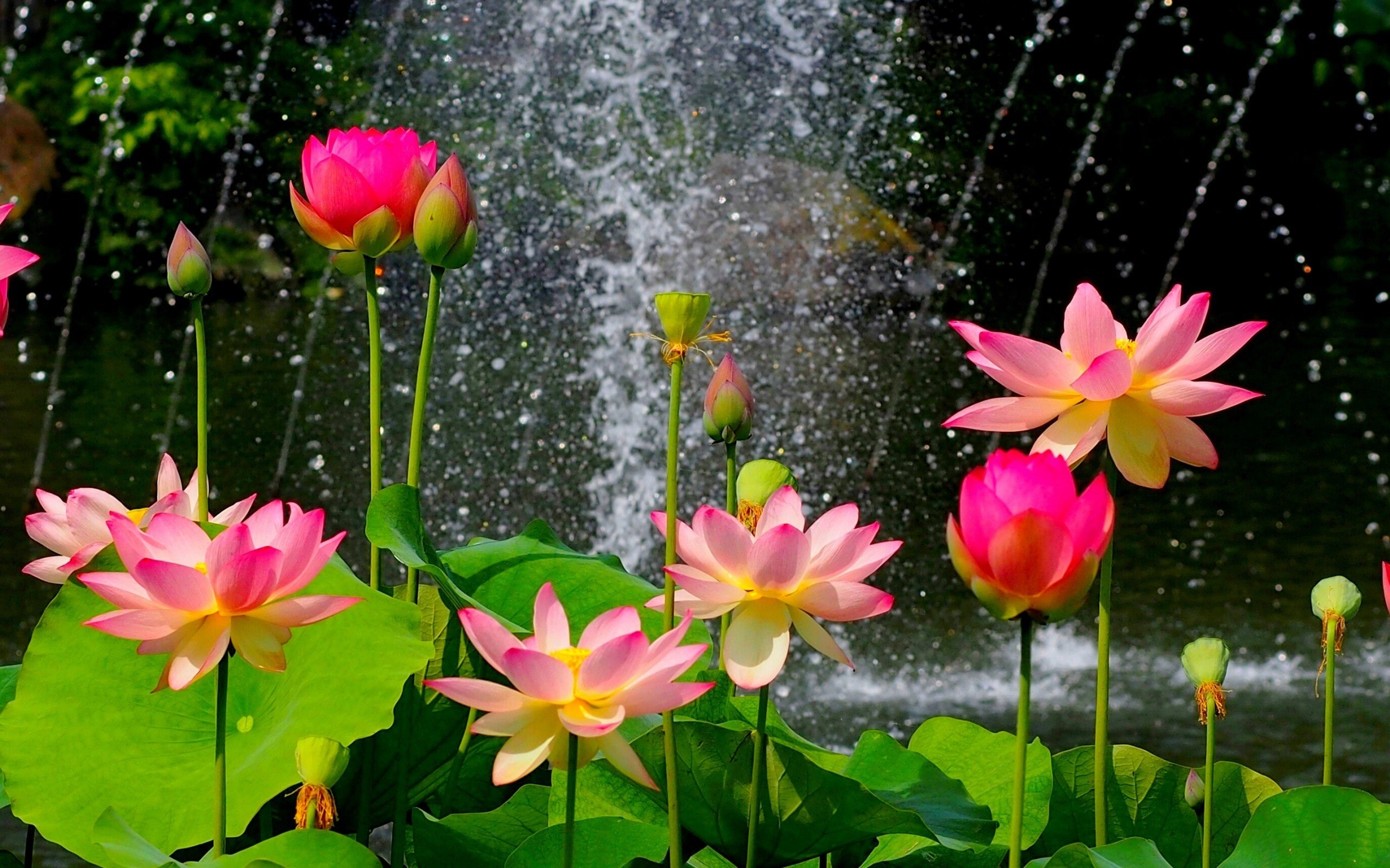 nature flower garden wild pink hd - [2560 x 1600]