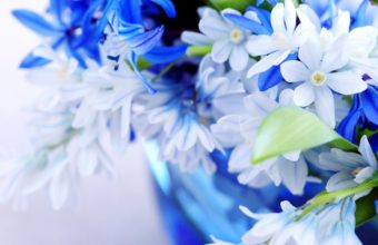 Nature Flowers Bouquet Blue White Soft 1920 x 1080 340x220