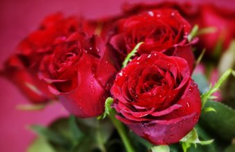 Nature Flowers Bouquets Rose Red Wallpaper 1920 x 1200 340x220