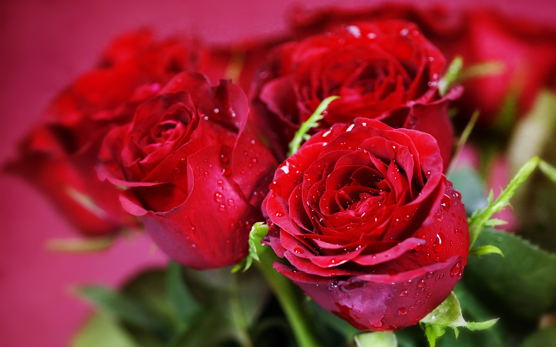 Nature Flowers Bouquets Rose Red Wallpaper 1920 X 1200