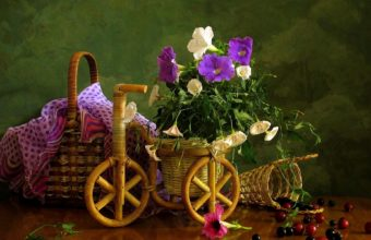 Nature Flowers Petals Still Life Country 1920 x 1200 340x220