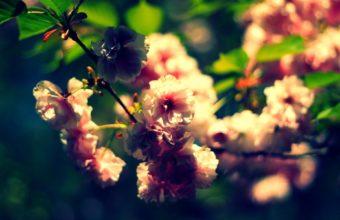 Nature Flowers Summer Depth Of Field 1920 x 1200 340x220