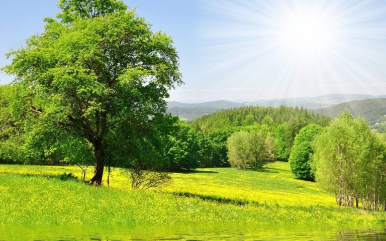 Nature Forest Trees Sun Green Meadow 1920 x 1200 768x480