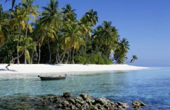 Nature Landscapes Beaches Palm Trees 1920 x 1200 340x220