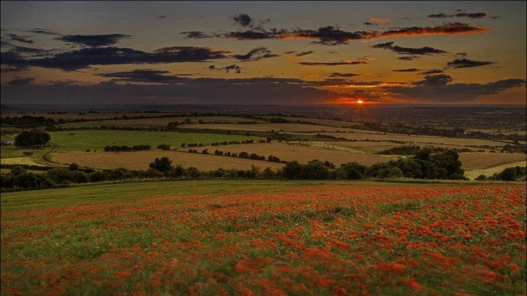 Nature Landscapes Hills Fields Grass 1920 x 1080 768x432