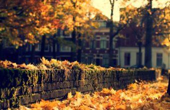 Nature Leaves Autumn Fall Seasons 1920 X 1080 340x220