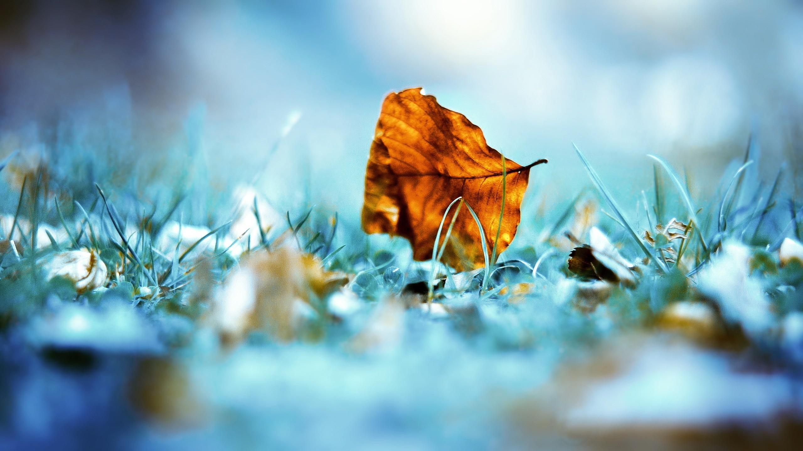 природа лист осень  № 543370 загрузить