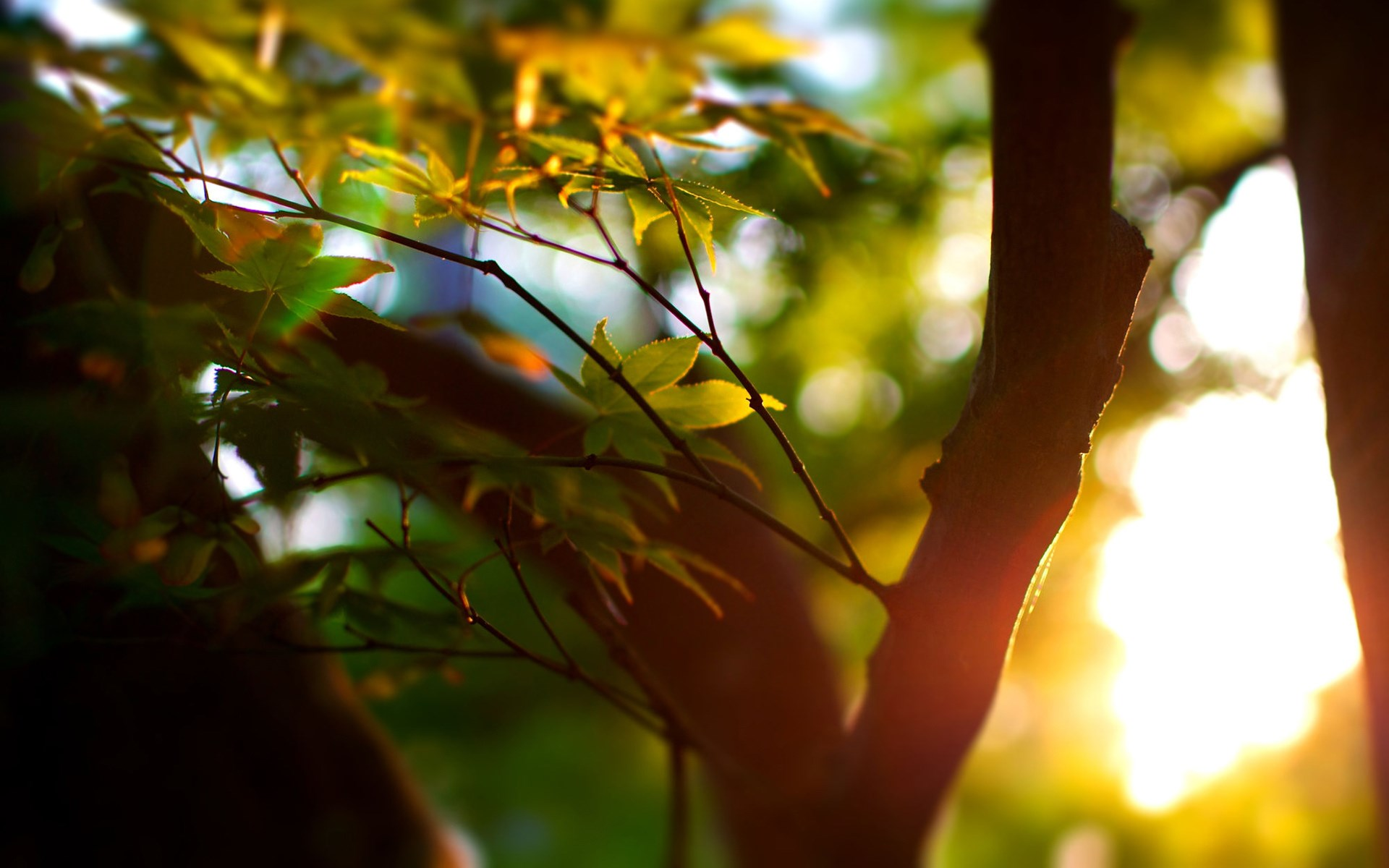 Лучи света сквозь листья  № 3096154 загрузить