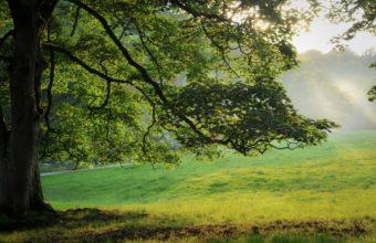 Nature Light Beams 3153 x 1968 340x220