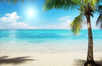 Nature Palm Trees Sea Beaches 1920 x 1200 340x220