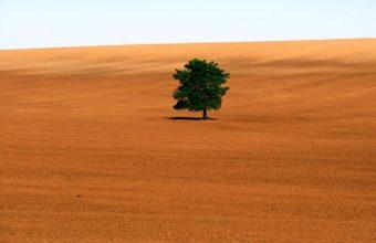 Nature Sand Trees Deserts 1600 x 1200 340x220
