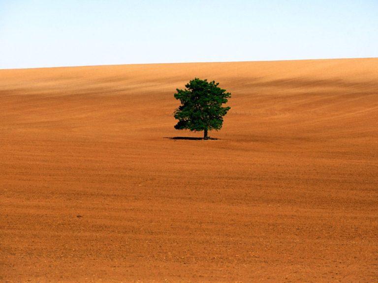 Nature Sand Trees Deserts 1600 x 1200 768x576