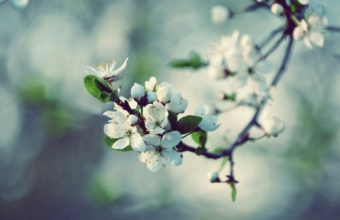 Nature Spring Blossoms Macro 2560 x 1600 340x220