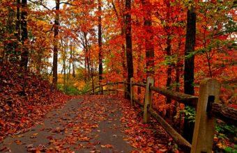 Nature Trees Colorful Road Autumn 2048 X 1361 340x220