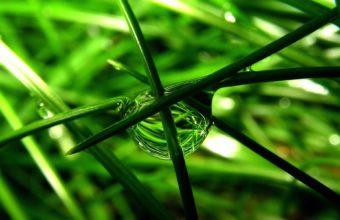 Nature Water Drops Macro Green Leaves 1920 x 1200 340x220