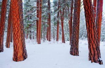 Nature Winter Trees 1920 X 1200 340x220