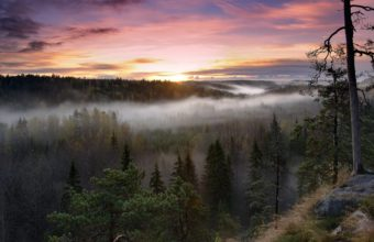 NaturenTrees Fog 2560 x 1600 340x220