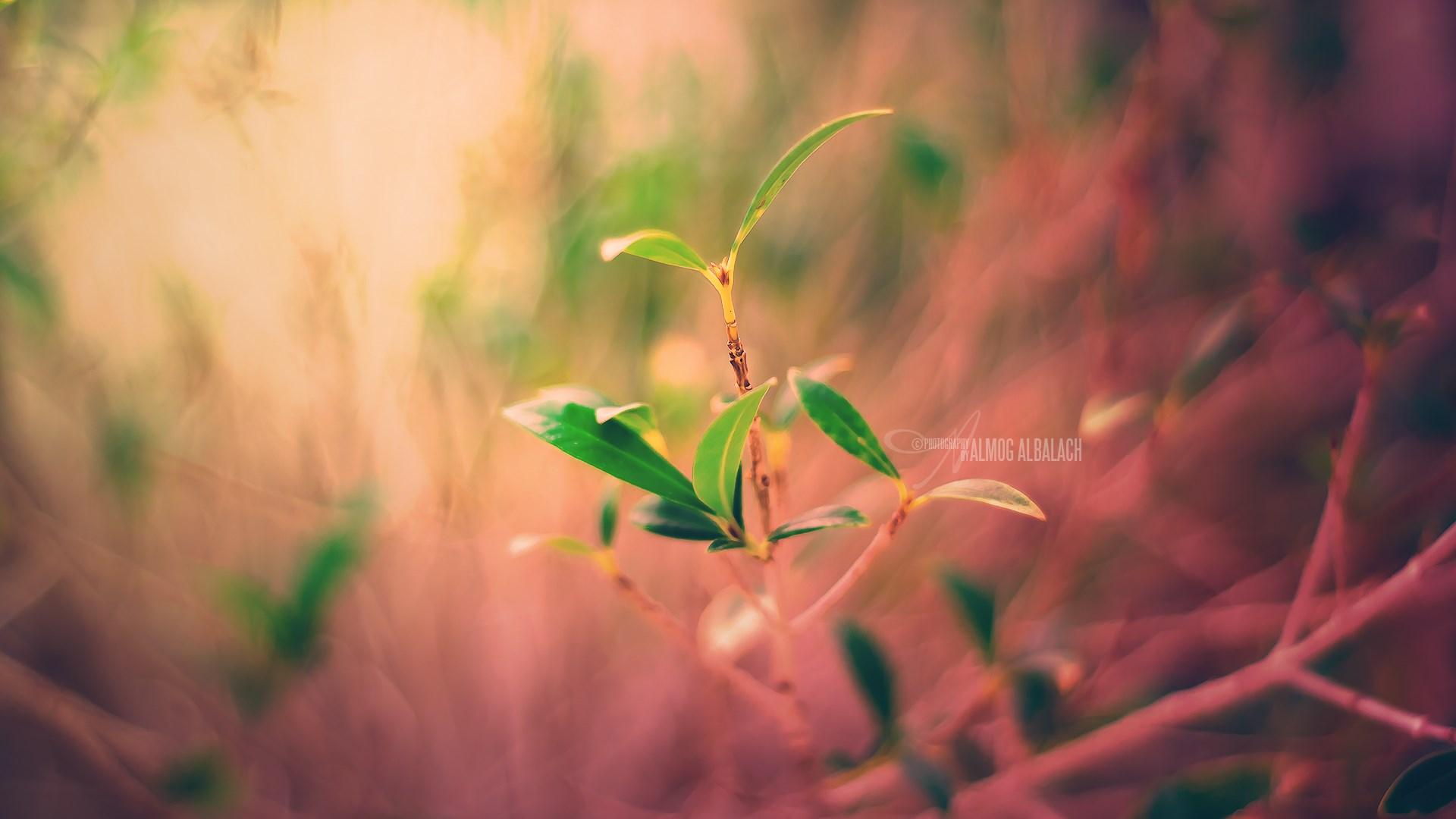 листья закат фокус смотреть