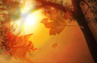 Orange Autumn 1680 X 1050 340x220
