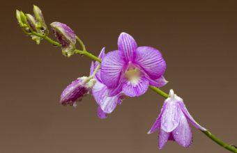 Orchid Flower Petals 2048 x 1536 340x220