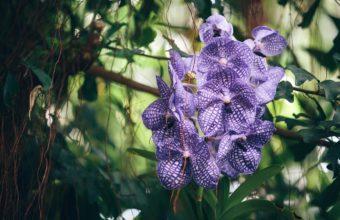 Orchid Purple Striped 1376 x 900 340x220