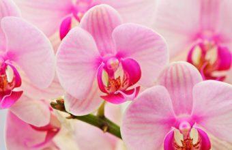 Orchids Flowers Petal 2560 x 1600 340x220