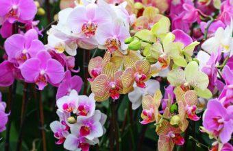 Orchids Flowers Petals 2560 x 1600 340x220