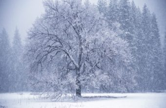 Owfall Winter Hoarfrost 1350 X 900 340x220