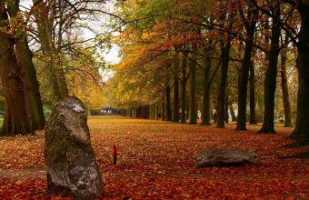 Park Autumn Leaves 1440 X 900 340x220