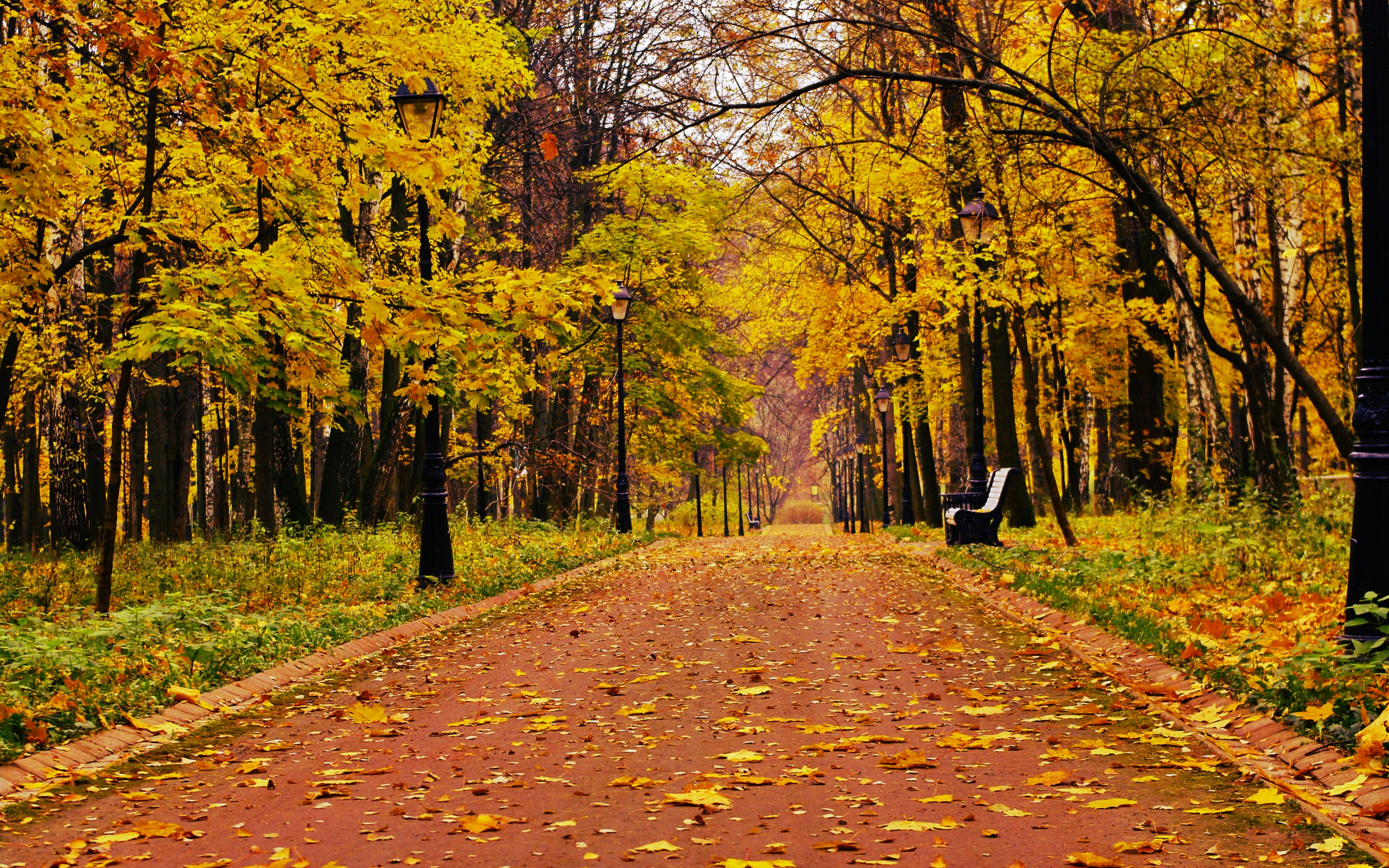Park Forest Alone Bench Bench 2880 X 1800